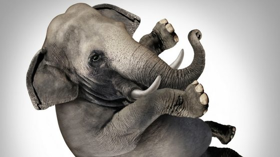 Make Money Trading - Elephant In The Room